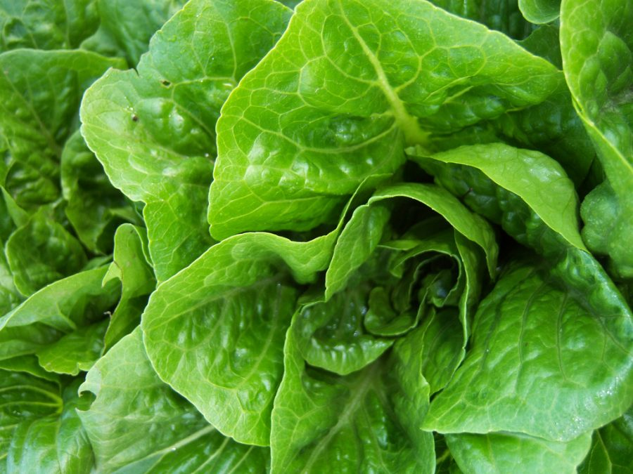 Romaine lettuce has been recalled nationwide.