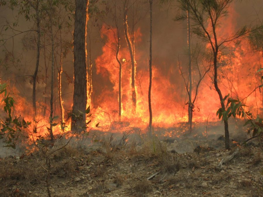 Bush fires rage on across Australia.