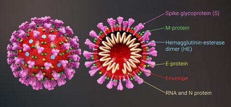 Coronavirus Confusion as the Flu Season Begins